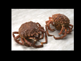 Atalantic crab