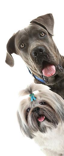 cute dog, dog grooming