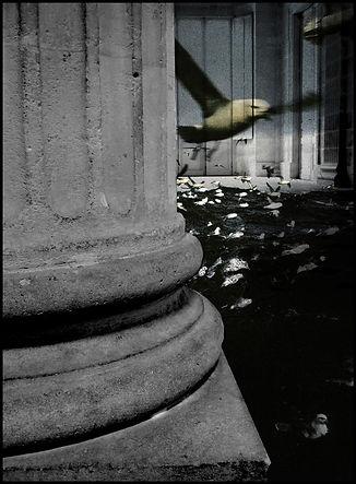 colonne-oiseau_web.jpg