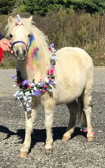 MINIATURE HORSE AS A UNICORN AT BIRTHDAY PARTY