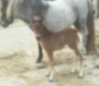 SILVER BAY FILLY 1.jpg
