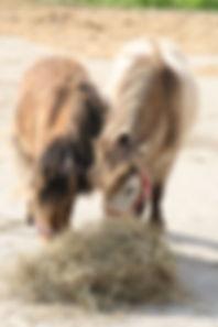 05.10.15 HORSES 025.JPG