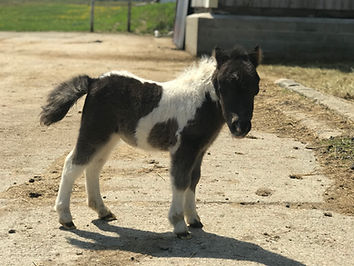 SOPHIE 2020 FILLY.jpg