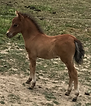 HONEY'S 2017 COLT 2.PNG