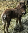 SILVER BAY FILLY 6.jpg
