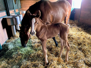 Jaquard's Filly