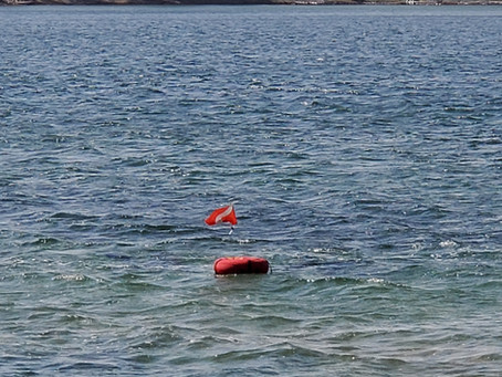 Saturday Silver Lake Shore Dive 4/3,  pre-Easter