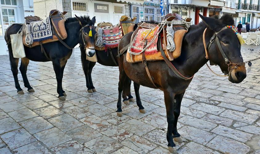 HYDRA HORSES