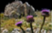 Visit Mani Laconia/ Cape Tenaron/ Mani Towers/ Diros Caves
