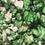 Thumbnail: Popcorn - Green Apple
