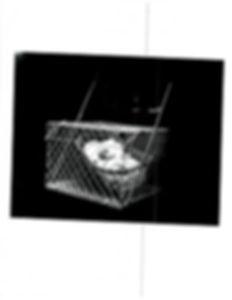 scan_14.jpg