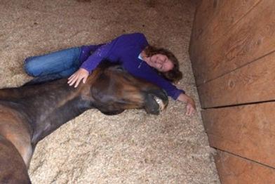 animal-reiki-healing-horses.jpeg