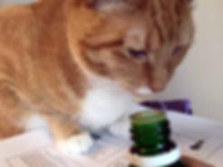essential-oil-healing-cats.jpg