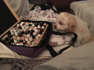 dog-essential-oils-animal-healing.jpeg