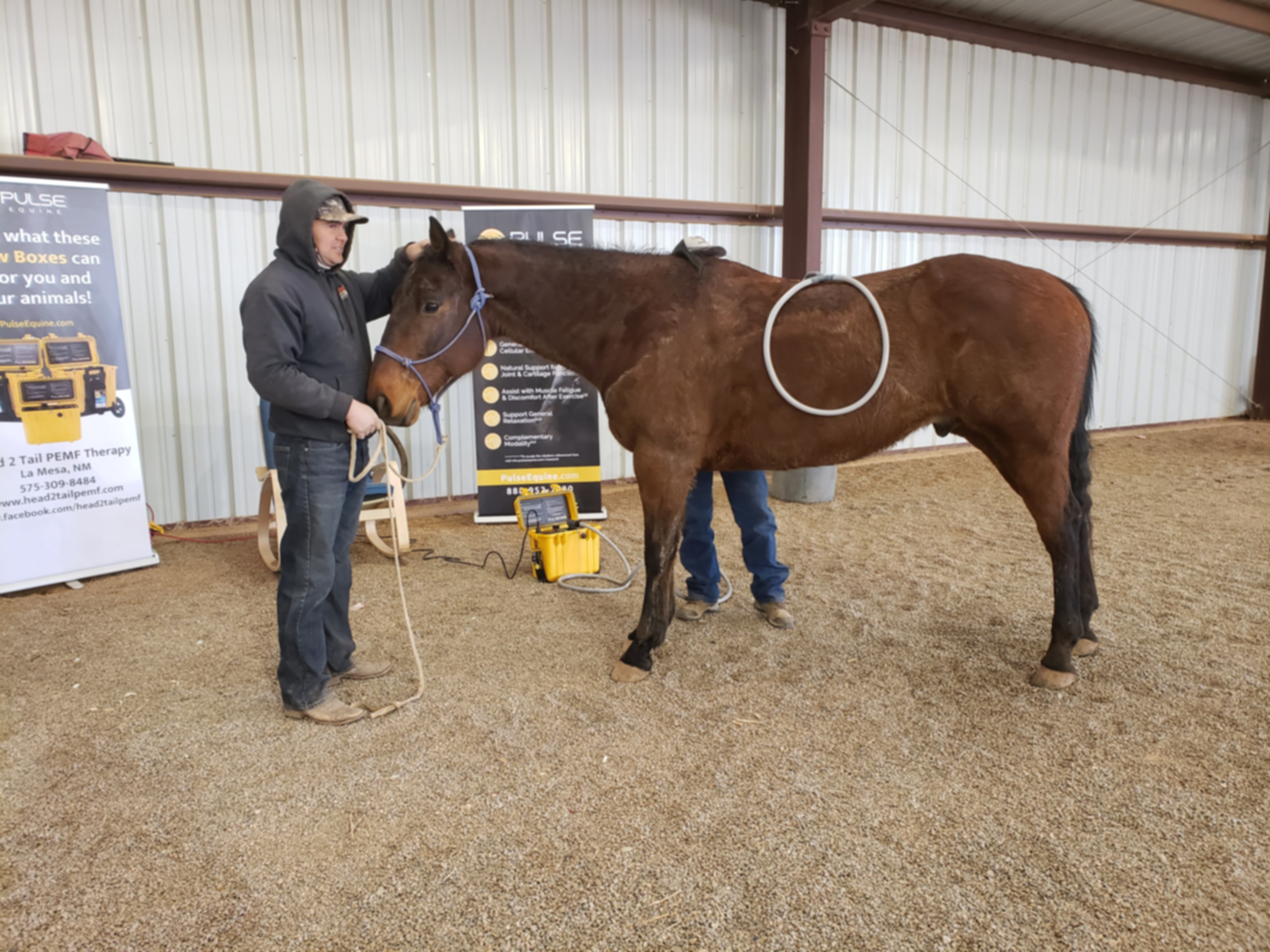 Horse PEMF whole body therapy