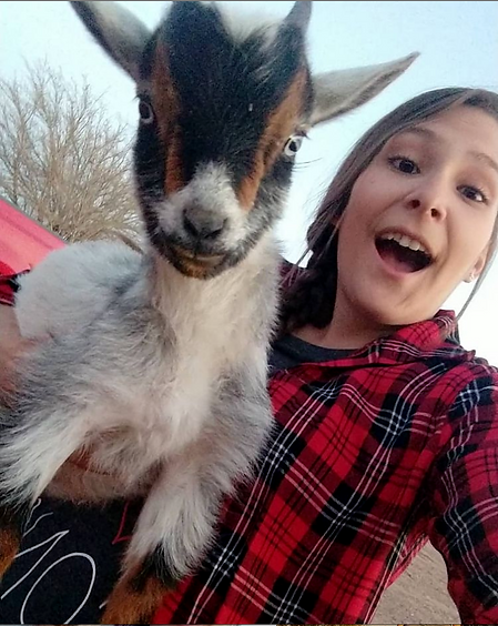 KyLee goat.png