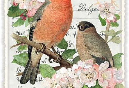 Postkarte Vogelpaar in Kirschblüte