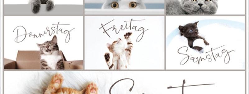 Postkarte Katzen Woche