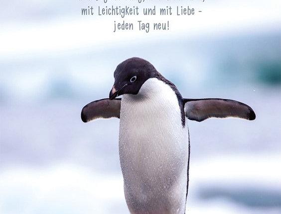 Glückwunschkarte mit Pinguin und schönem Text