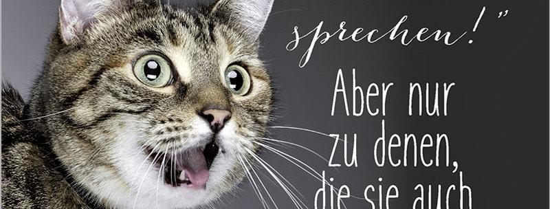 """Kult-Schild """"Katzen können sprechen"""""""