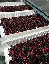 Cherries on the Line.PNG