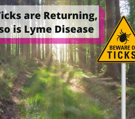 Ticks Are Returning, So Is Lyme Disease
