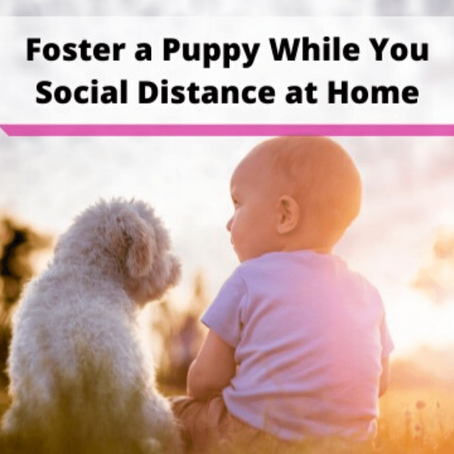 National Puppy Day: Foster a puppy while you social distance at home