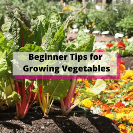 Beginner Tips for Growing Vegetables
