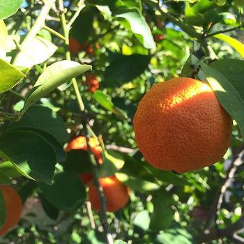 'Things that are orange' number 1 - Oranges