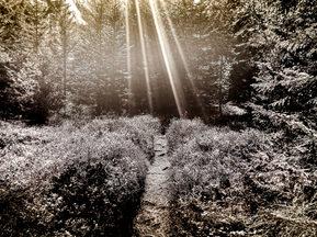 Original Avelon Photography Print