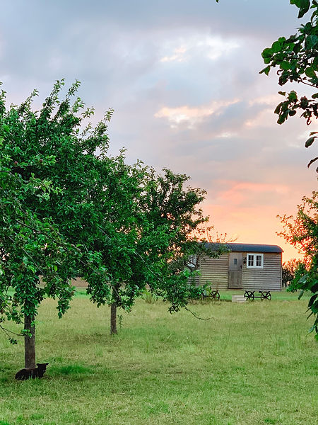 Shepherds Hut Orchard Picture.jpg