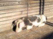 Foto%20Schweine%20(2)_edited.jpg