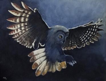 MR_Owl1.jpg
