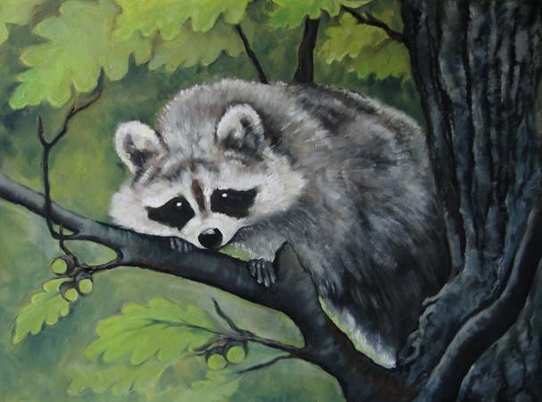 MR_Raccoon.jpg