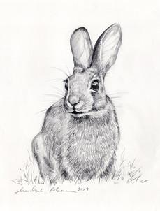 MR_Rabbit.jpg
