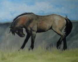 MR_Horse1.jpg