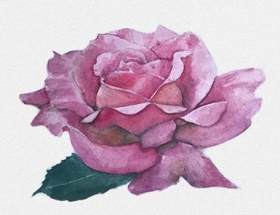 MR_RoseWatercolor.jpg