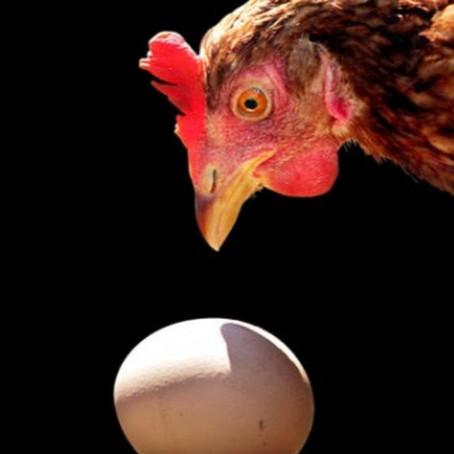Сотаку-доджи: курица и яйцо, дзен-мастер и ученик.