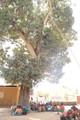 Unterricht unter dem Mangobaum
