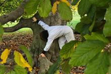 Kopi av Tree Talks Serie 1_2.jpg