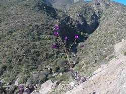 Valle de Elqui, región de Coquimbo