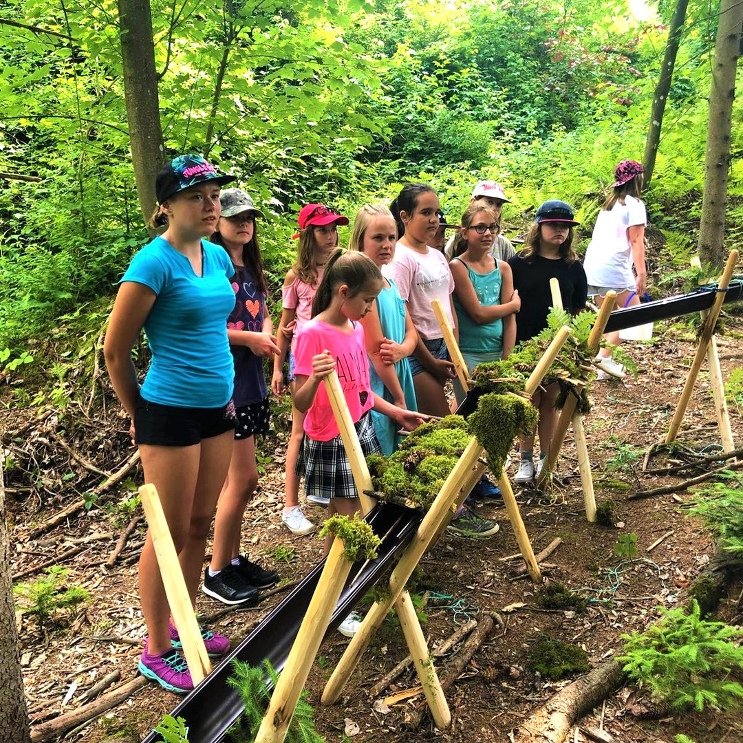 PM Schulprojekte Wald