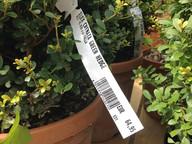 plant-hang-tag_0.jpg