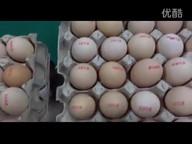 Sojet Elfin VIE printing on eggs