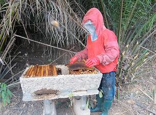 Ausbau Bienenproduktion.jpg