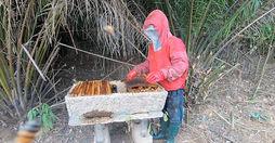 Ausbau der Honigproduktion