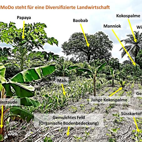 Hohe Biodiversitätsdichte und gesunde Böden