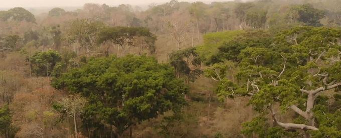 Mini Urwald auf der Farm