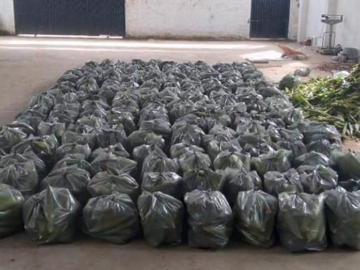 Prefeitura de Conde entrega milho à população em situação de vulnerabilidade nesta quinta e sexta