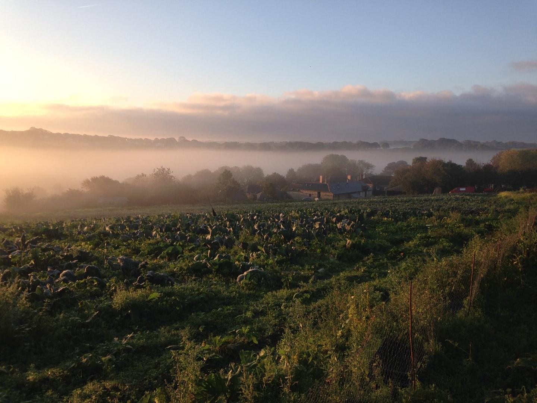 Cusgarne fields.jpg